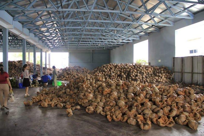 HTX sản xuất rượu dừa truyền thống tại Hưng Yên